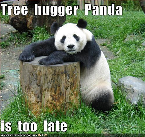 Panda bear funny - photo#2