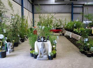 Bamboo nursery attending gippsland garden expo