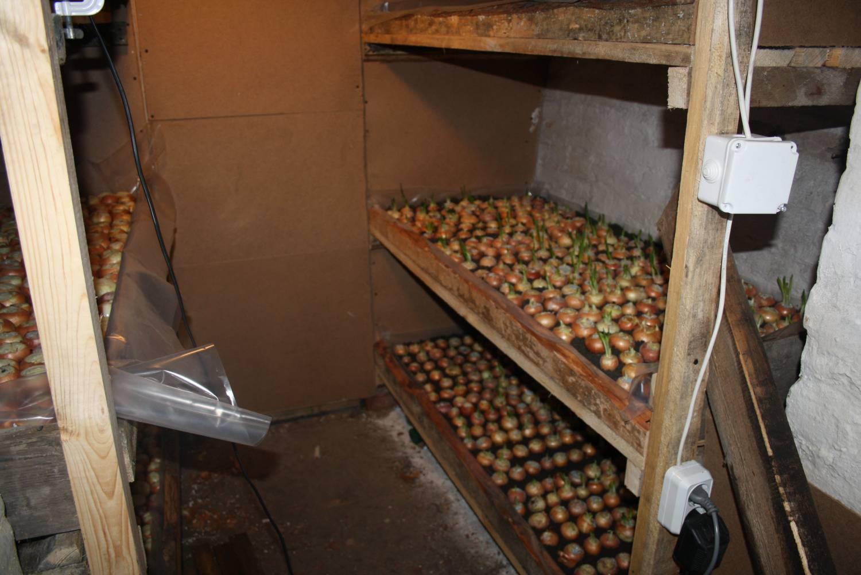 Бизнес по выращиванию в гараже 49
