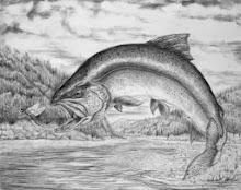 CT. 2014 Angler's Guide