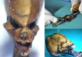 http://www.ciencia-online.net/2013/05/esqueleto-de-aspeto-alienigena-e-um.html