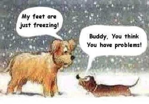 Funny Freezing Dog Cartoon Picture - My feet are just freezing  Buddy    Freezing Outside Quotes