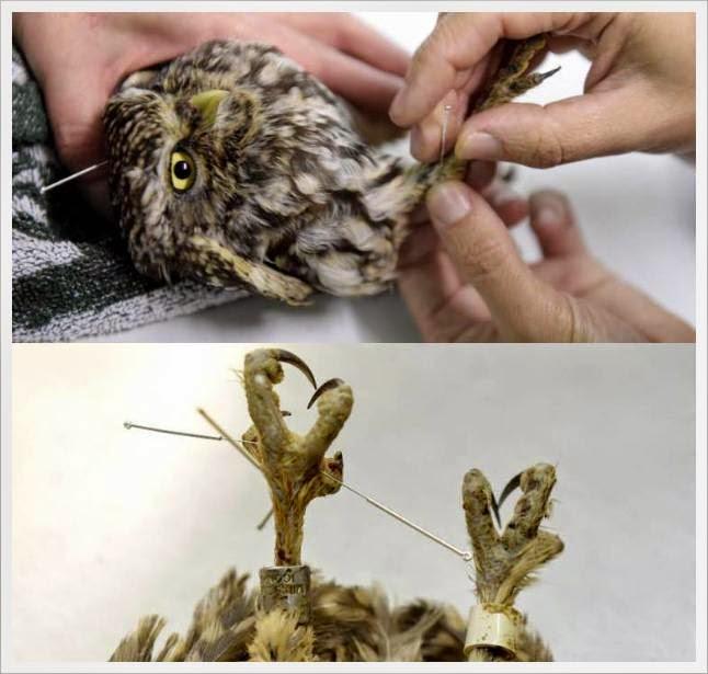Cara mengobati luka pada burung
