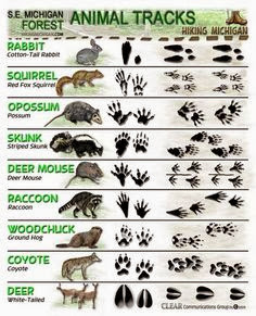 Identify Animal Tracks on your field