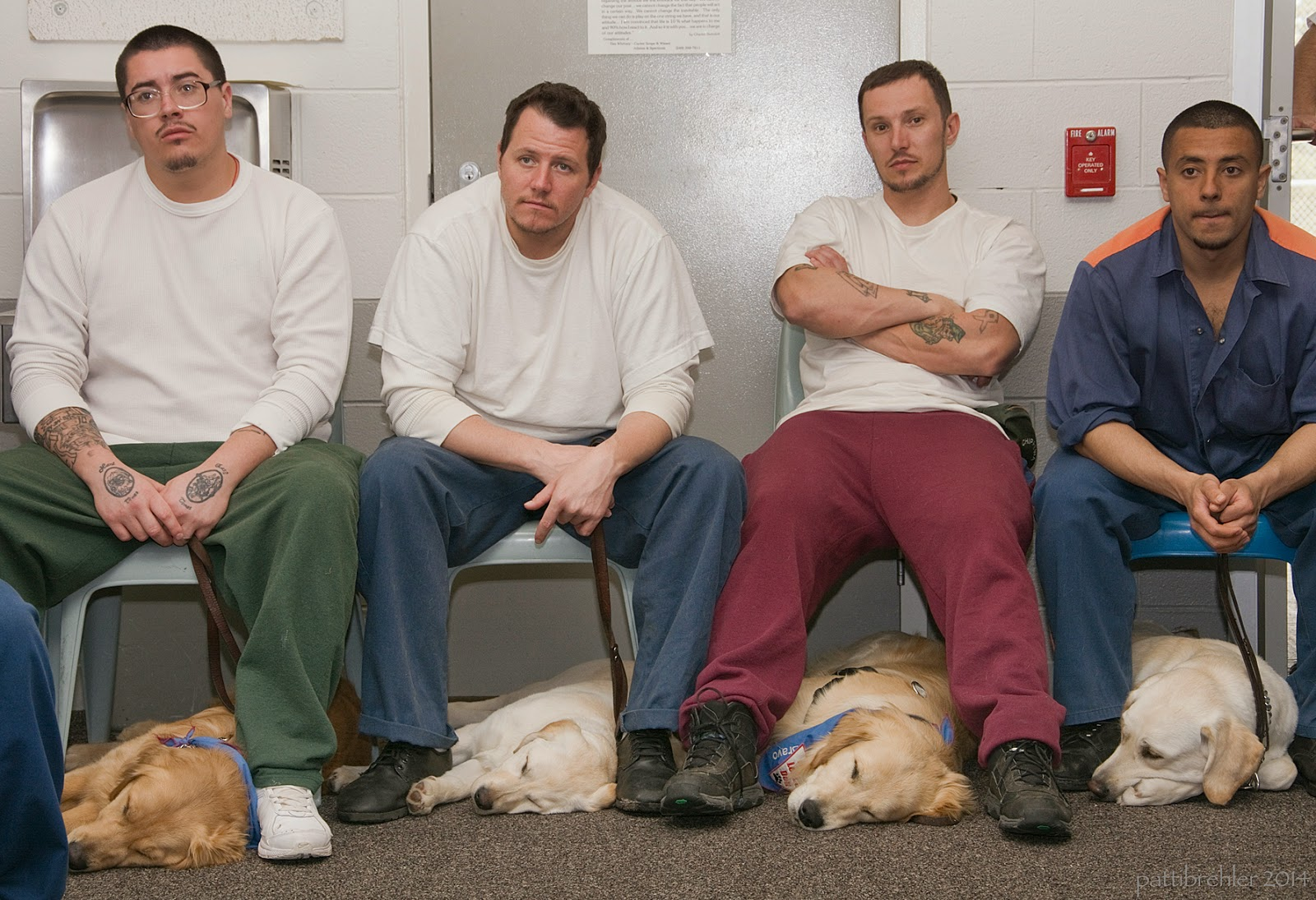 Four men are sitting on light blue plastic chairs in a row facing the camera. The first man, left to right, is wearing green pants and a white shirt and glasses, the second man is wearig blue pants and a white shirt, the third man is wearing maroon pants and a white t-shirt, and the fourt man is wearing the blue prison uniform. All the men have puppies lying down beneath them on the floor and under their chairs. The dogs are, left to right, a golden retriever, a yellow lab, a golden retriever and a yellow lab. The dogs are all lying on their left sides with their heads facing left and are asleep. The men all have sad faces.