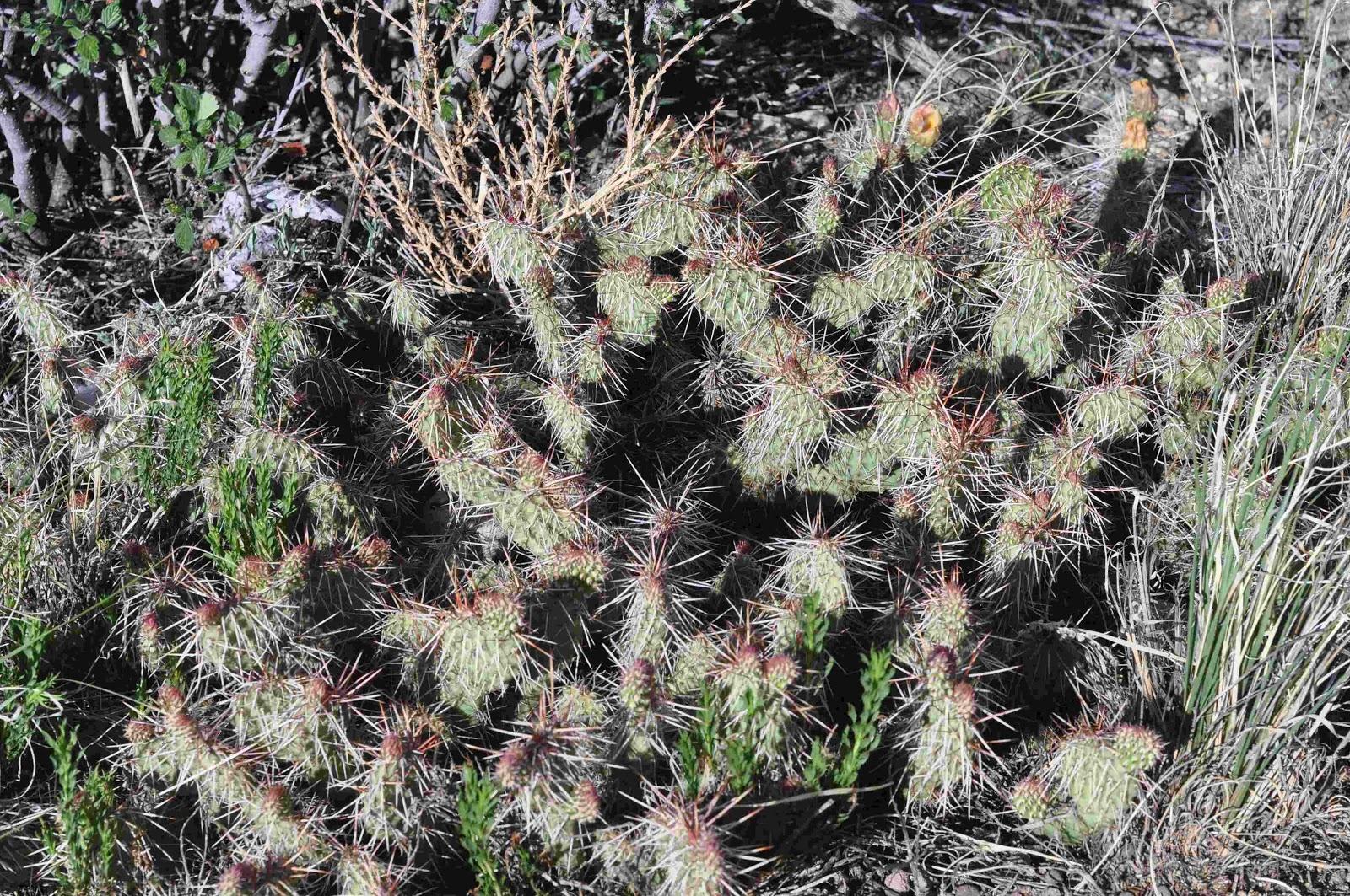 cactus Greencrest Buena Vista coloradoviews.filminspector.com