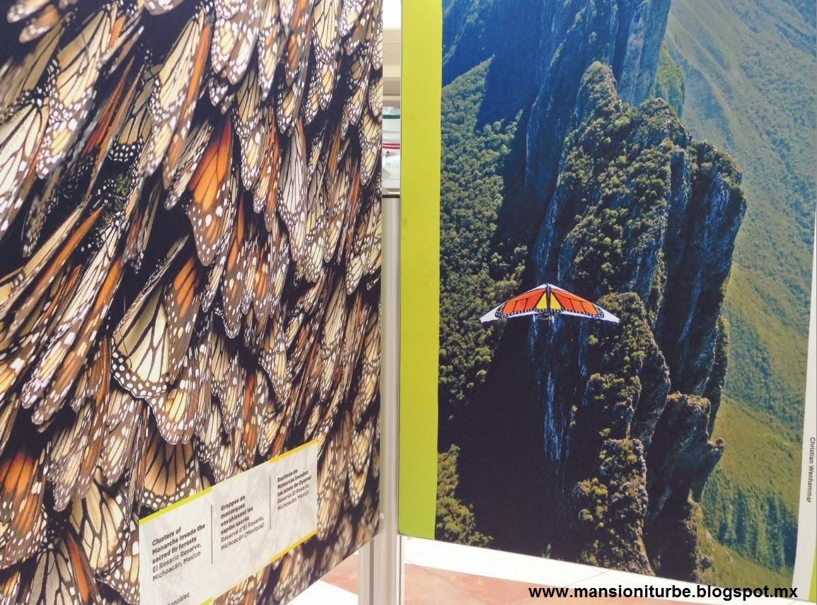 Fotografías de la Exposición de el Viaje de la Mariposa Monarca