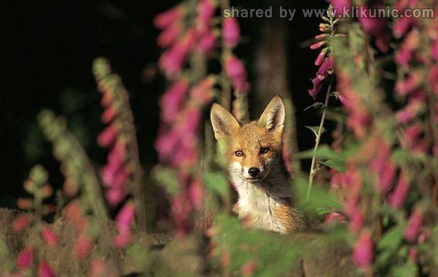 http://1.bp.blogspot.com/-1a8UjM4e1BY/TXzEmyET7TI/AAAAAAAARDw/2Uu96IJUjT8/s1600/these_funny_animals_635_640_16.jpg