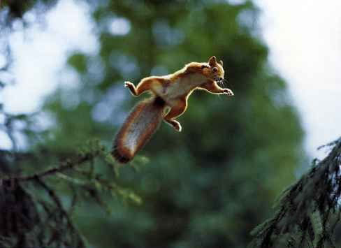 Amazing Animals Jump  Nice Pics gallery pictures