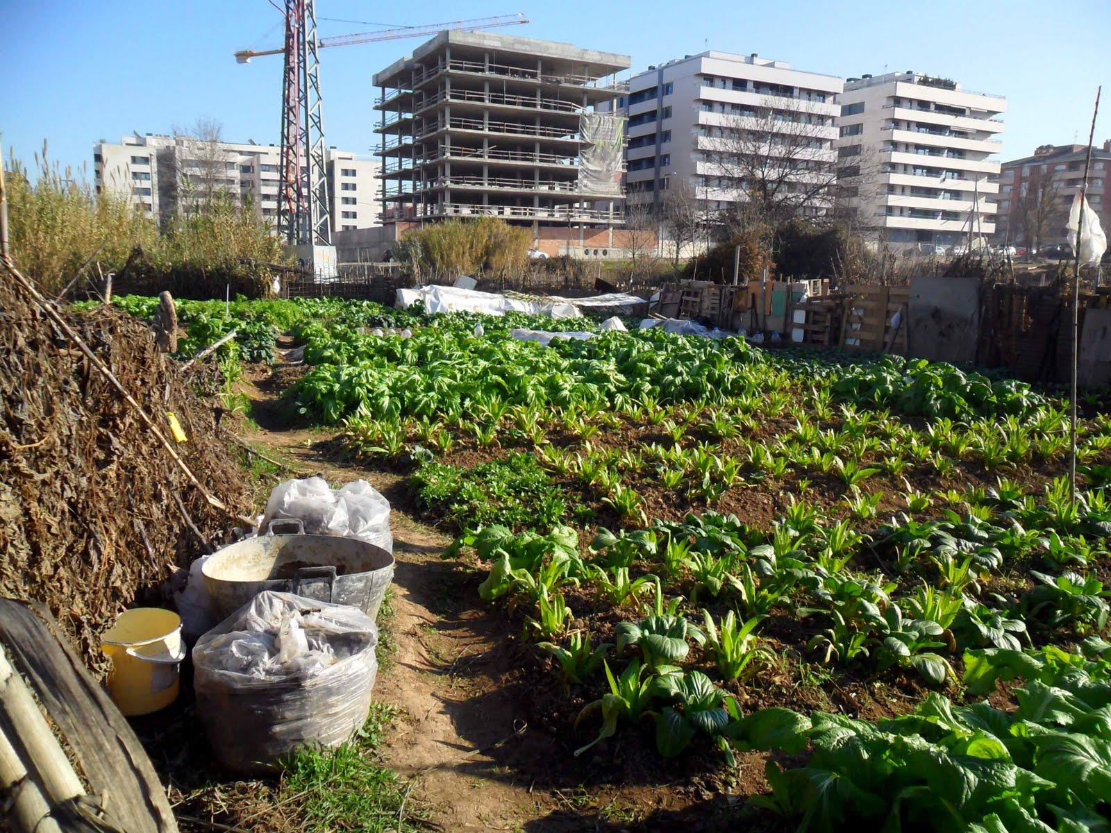 Bosques de alimentos una soluci n al problema del hambre - Como hacer un huerto urbano ...