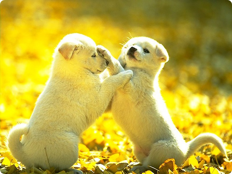 Cute Dogs Puppies