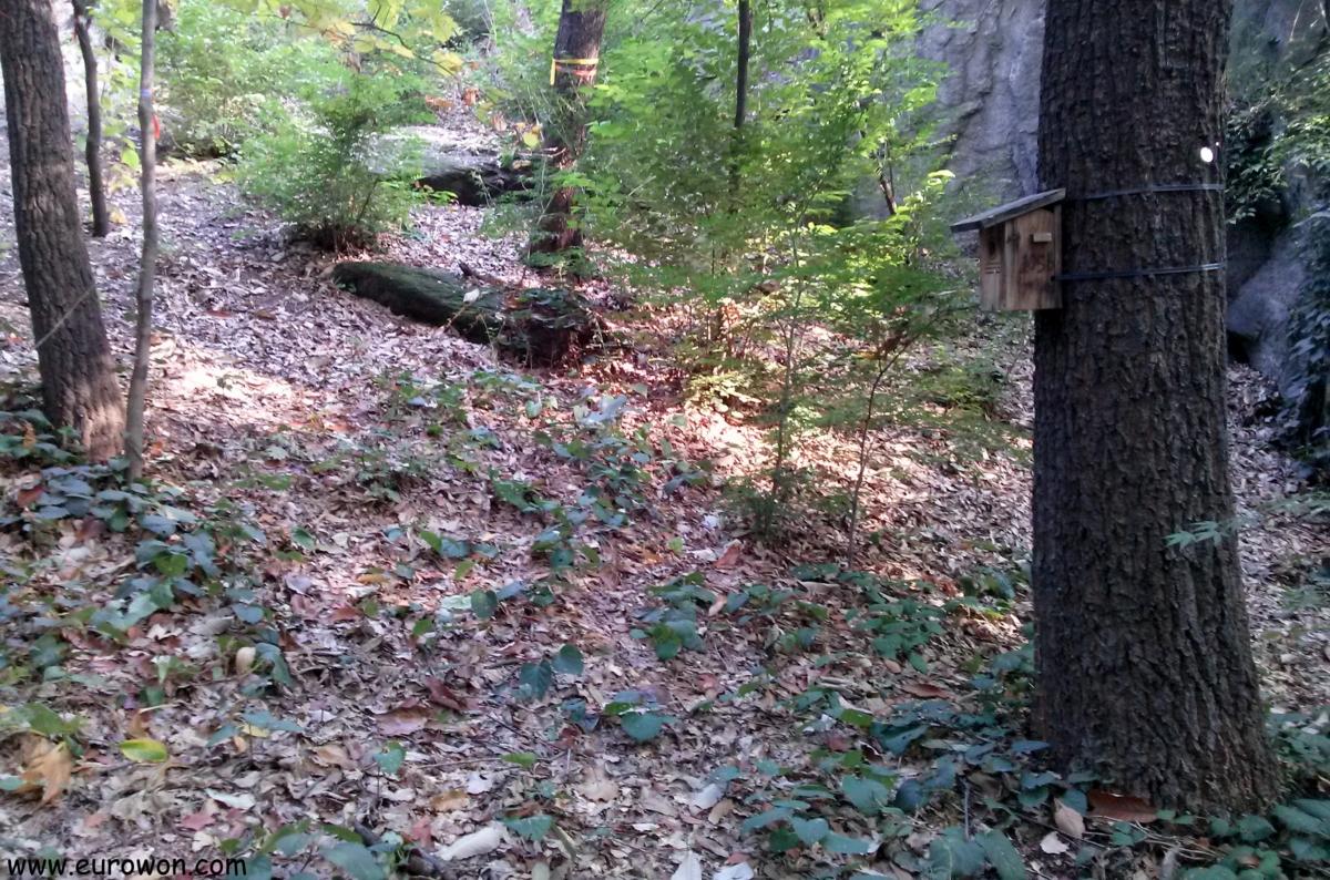 Casita para pájaros en un bosque de Seúl