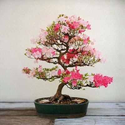 nice-flower-plants