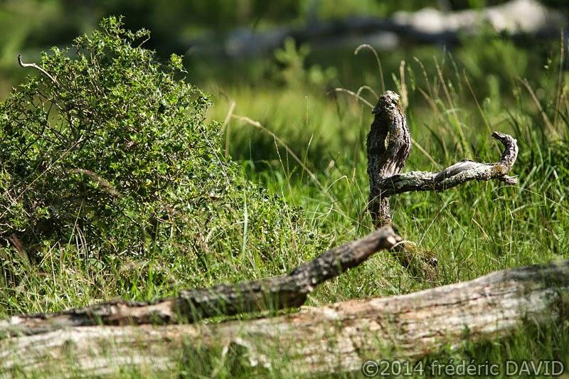 nature oiseau bois forêt Fontainebleau Seine-et-Marne