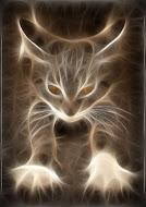 Gatti nel Web