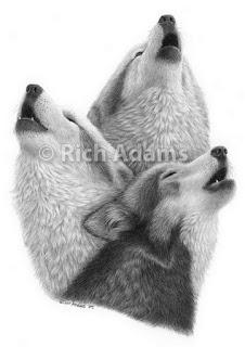 dibujos-animales-salvajes