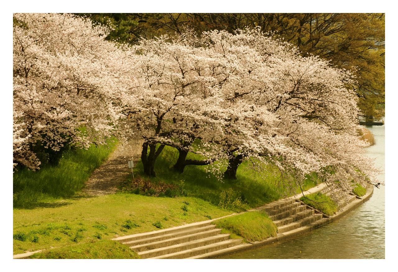 http://1.bp.blogspot.com/-1bfIDQxeiLQ/TmlOJ2_Y_kI/AAAAAAAAE5g/BMjNVMXlpfM/s1600/free+spring+wallpaper-1.jpg