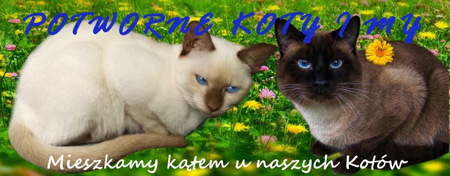 Potworne Koty i My