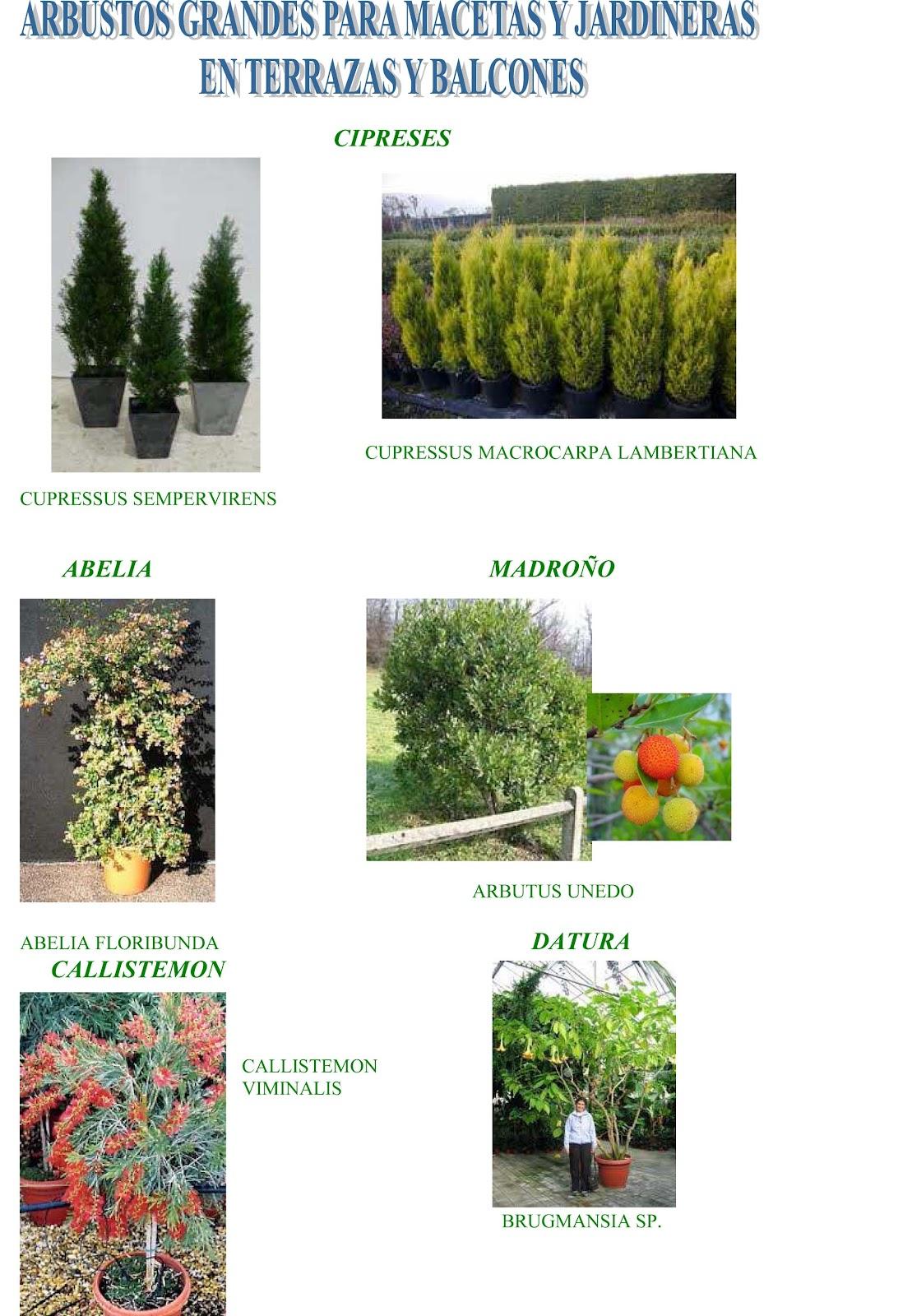 Jara jardiner a y paisajismo arbustos grandes para for Todo sobre jardineria