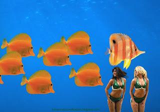 Boston Celtics desktop Wallpapers Celtics Beautiful Cheerleaders Babes in Aquarium with Fishes Desktop wallpaper