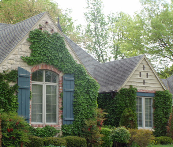Ivy on pinterest ivy wall climbing roses and cottage for The ivy house