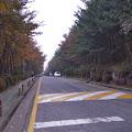 紅葉,森林,ソウル,韓国〈著作権フリー無料画像〉Free Stock Photos