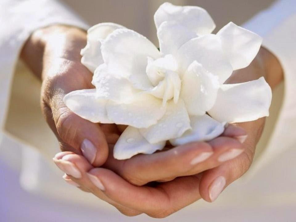 Una flor de loto para ti.