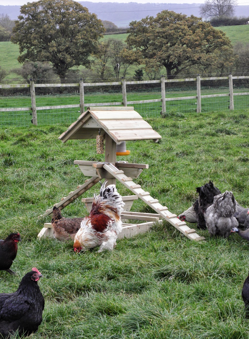 Flyte so Fancy Chicken Coops
