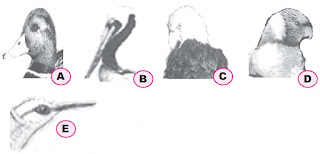 Pengertian dan Macam-macam Contoh Adaptasi Morfologi pada Hewan, Tumbuhan dan Manusia