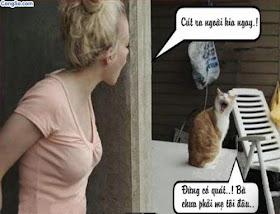 Hình ảnh hài hước nhất thế giới