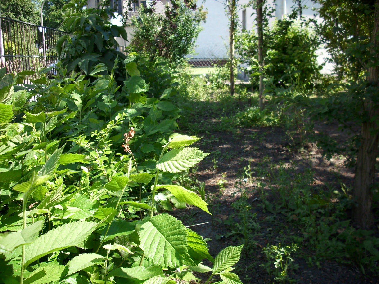 Mein Ganz Wilder Garten Die Wunderhecke