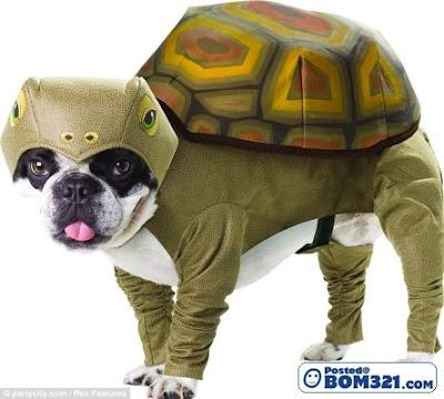 Kostum dinosaur