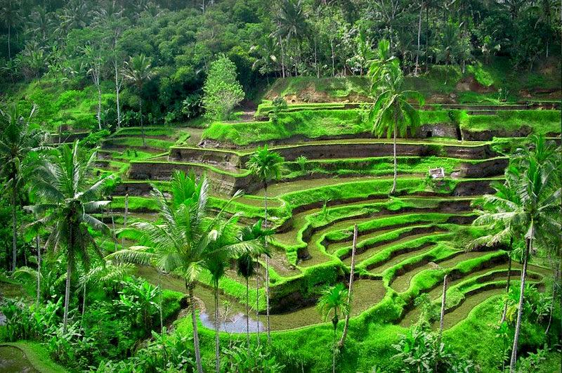 World Visits Ubud Bali Popular Places For Tourists Atraction
