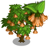 FarmVille Angel Trumpet Tree  (Day 2)