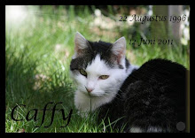 Memoriam: Caffy