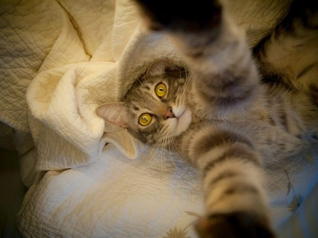 cats-taking-selfies-3