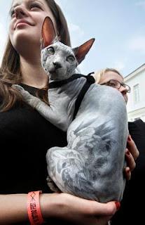 sphynx cat tattoo skin