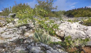 Vinogradi na kamenu – oda Mijačkim težacima