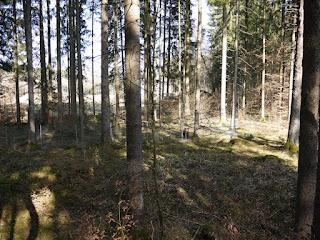 Blick in nordöstliche Richtung von der Nordostecke der Keltenschanze Kreuzpullach