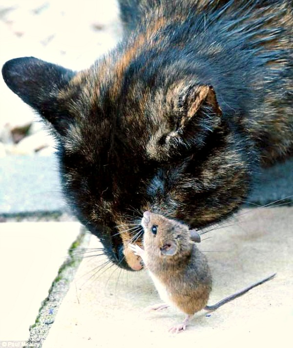 cat and hamster friends