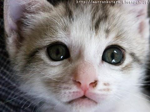 子猫の写真 光彩の色が変化中