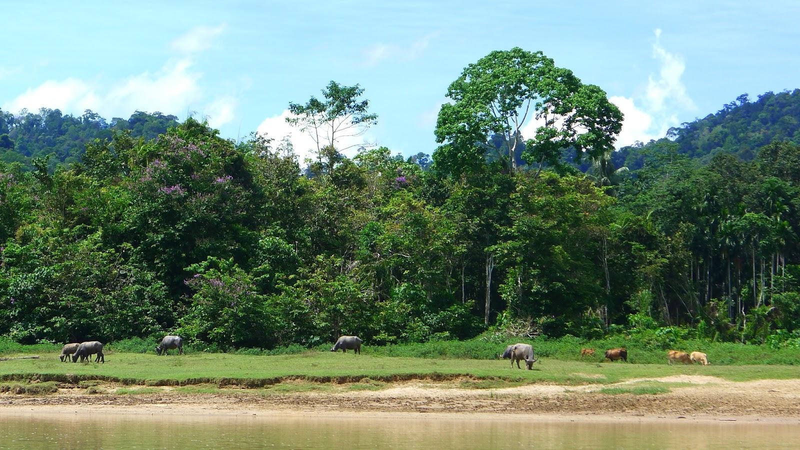 Hi world nuestro viaje por el mundo taman negara - Mas goy fornells de la selva ...