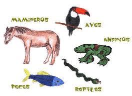 ANIMALES VERTEBRADOS vertebrados peces anfibios reptiles aves