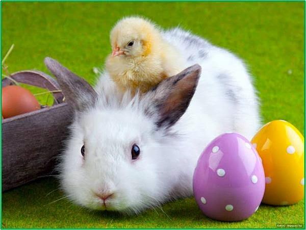 Veselú Veľkú noc! / Happy Easter!