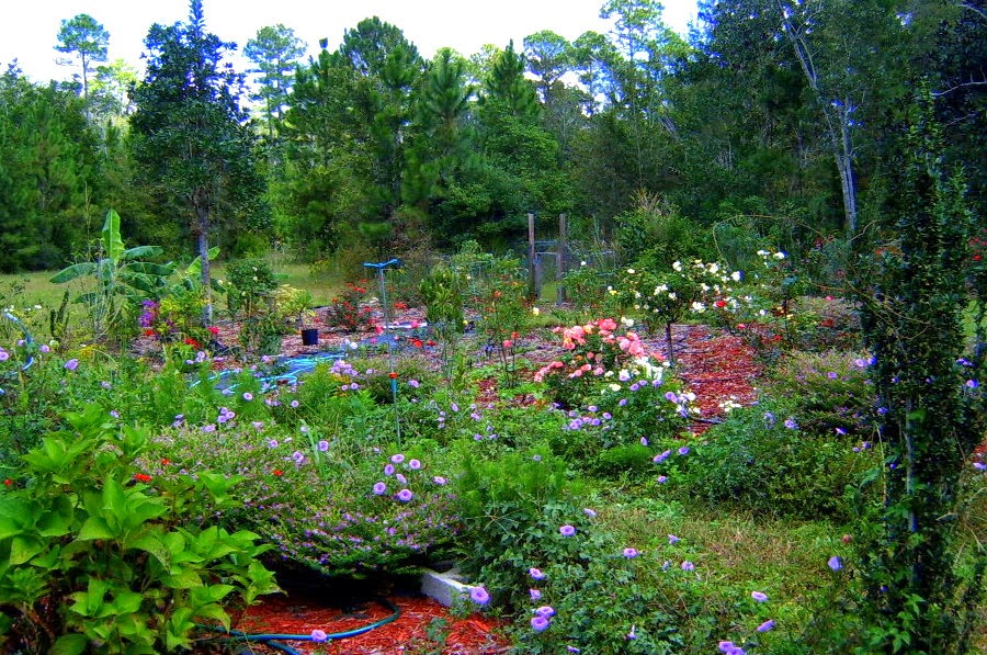 Alabama Rose and Flower Garden from a Non-Green Thumb: October Bloom