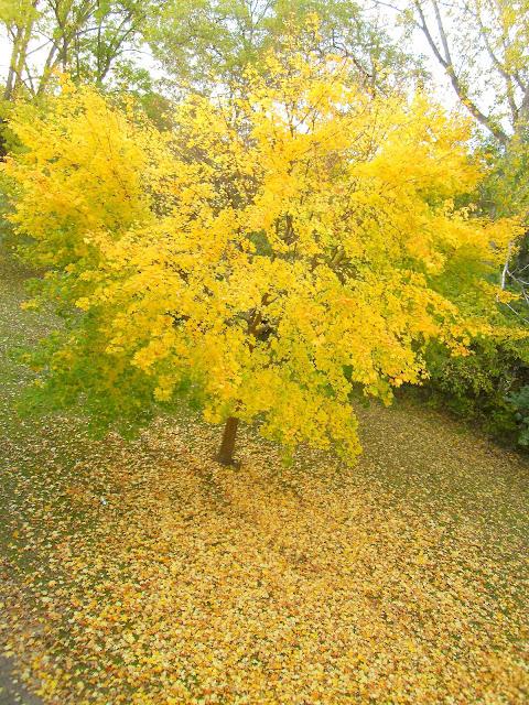 outono em salzgitter