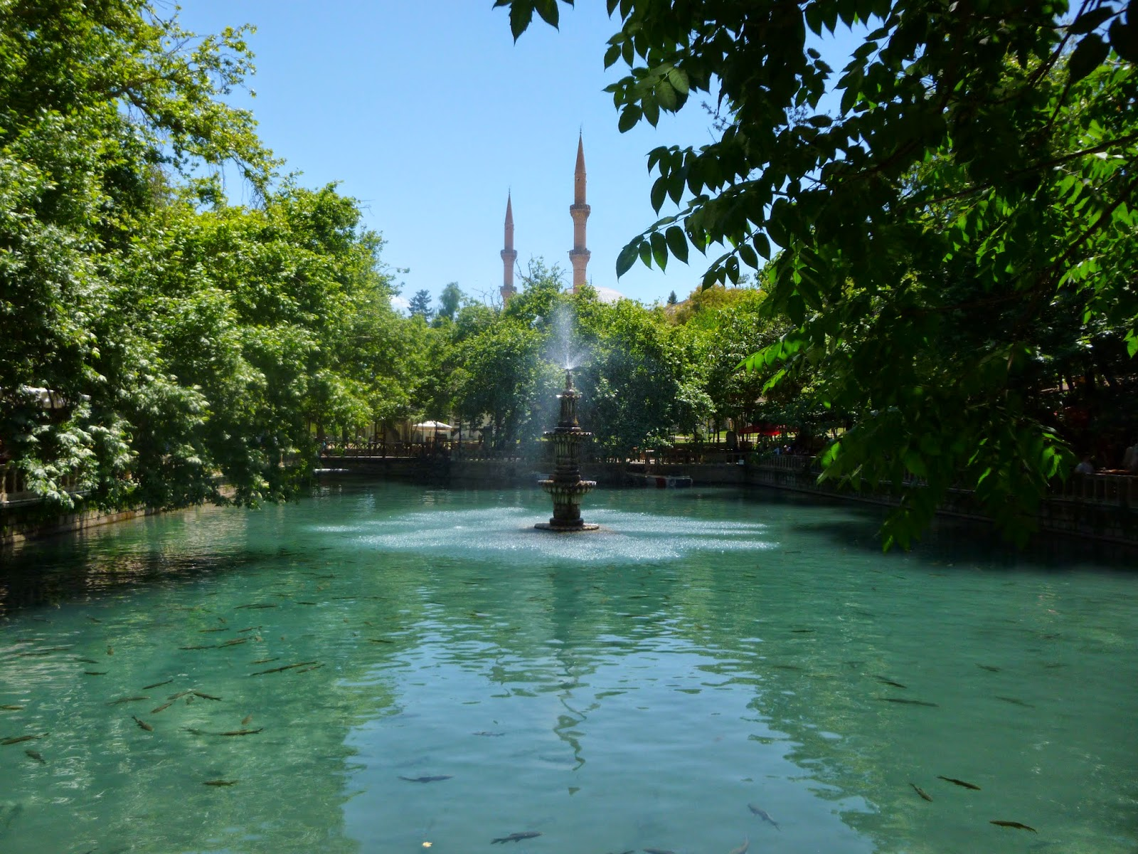 The fish pool in Sanliurfa, Turkey.