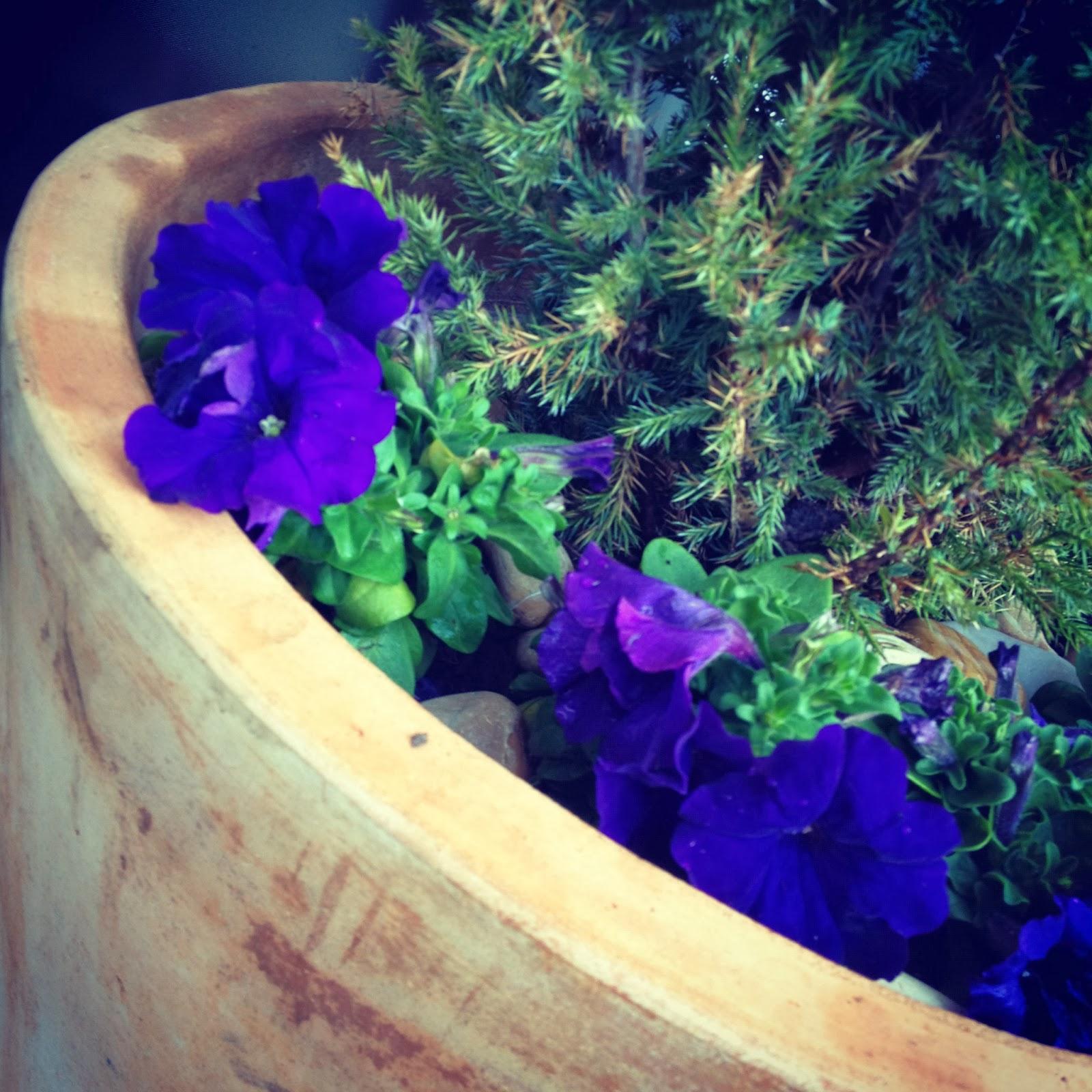 Fashion Friday - Picnic in the Park - Natasha in Oz - Autumn - Pot plant image