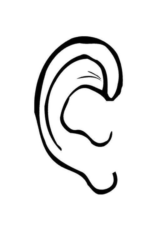 Bonjour c 39 est fibretigre pourquoi a t on deux oreilles - Pourquoi van gogh s est coupe l oreille ...
