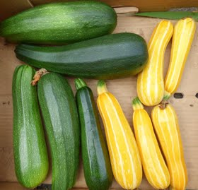 Dealing with a glut of courgettes